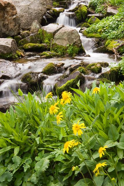 Mountain Waterfall and Wildflowers