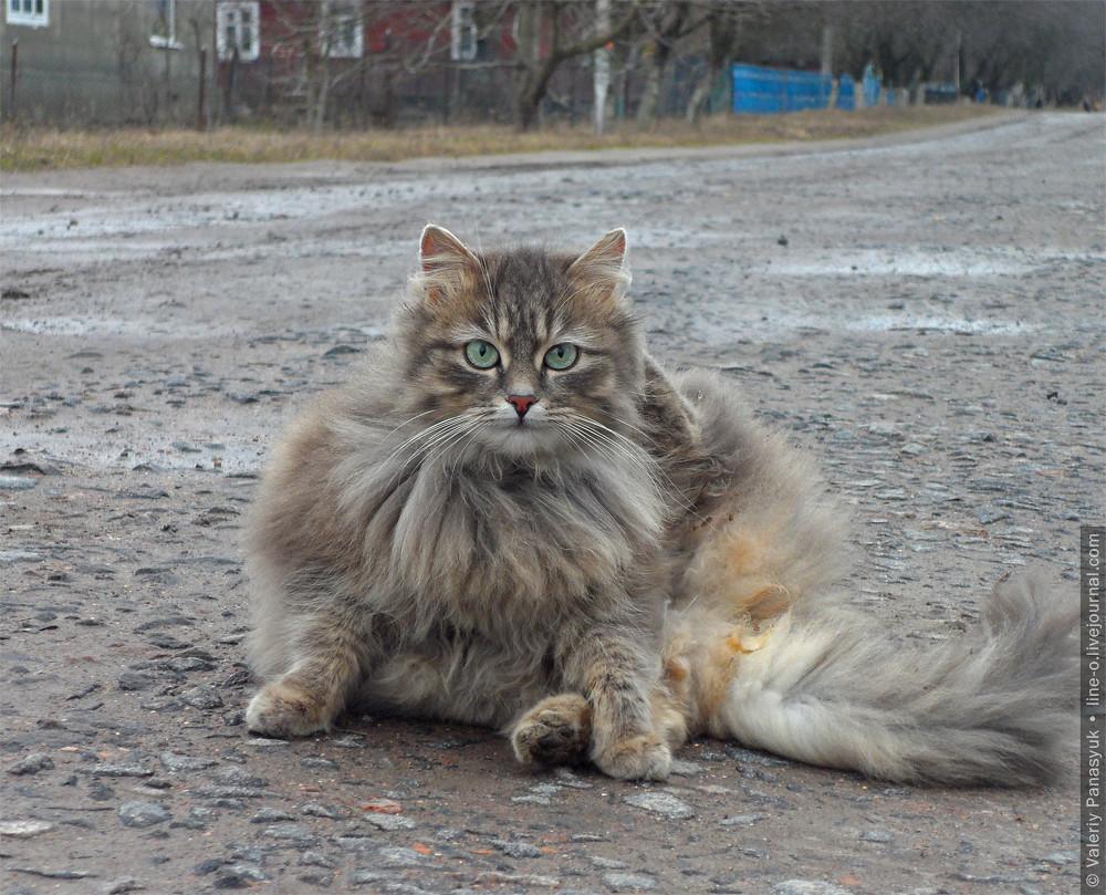 20160220_bilychi_cat_001