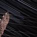 StarTrails - Céu de Brotas-SP por Cássio Olimpio