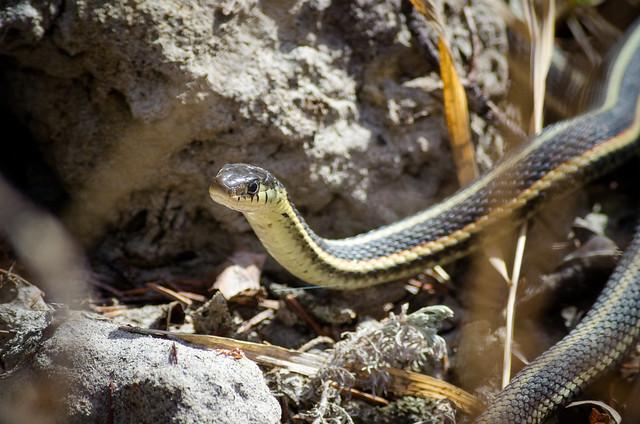 Sun-tanning Snake