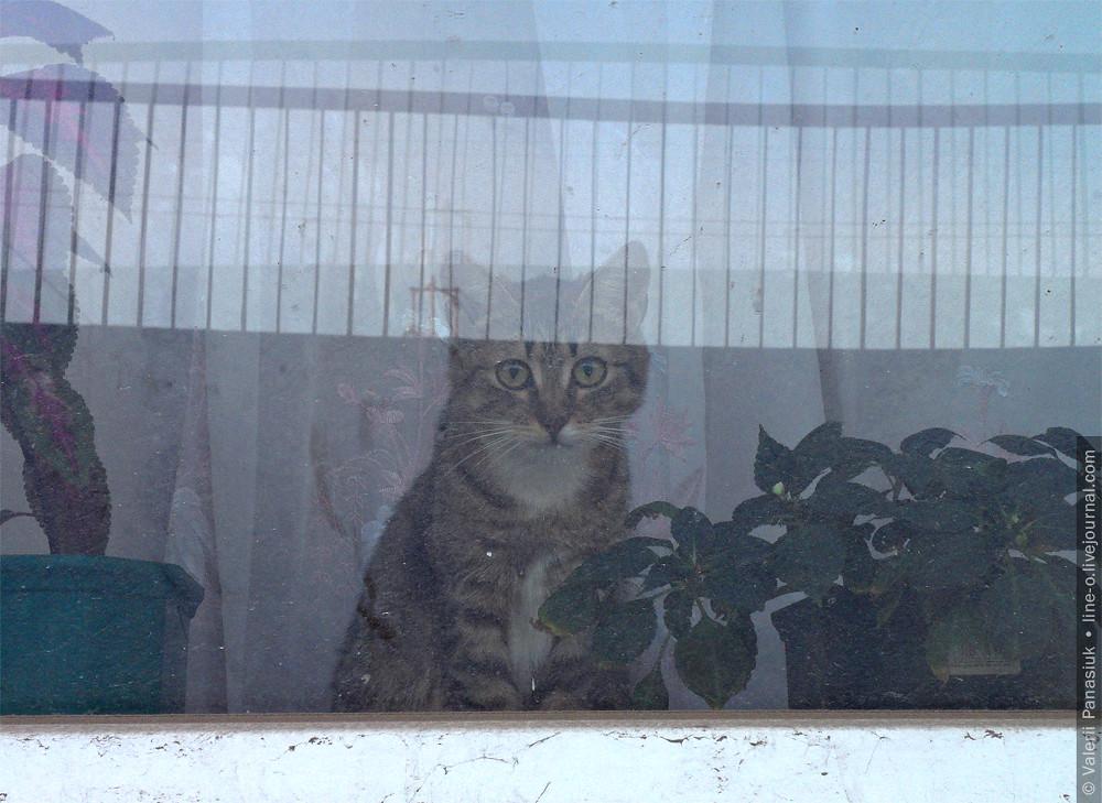 20160316_lutsk_cat_002