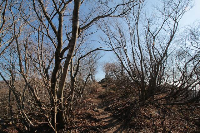 20141122-武奈ヶ岳&京都ライトアップ-0139.jpg