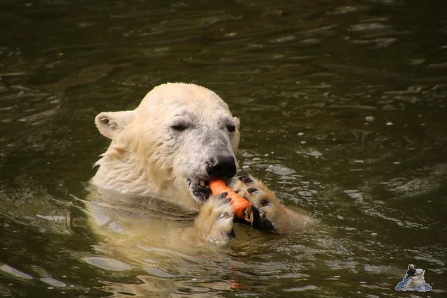 Tierpark Berlin 17.04.2016  040