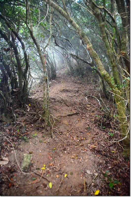 巴層巴墨山登山小徑綠色隧道 2