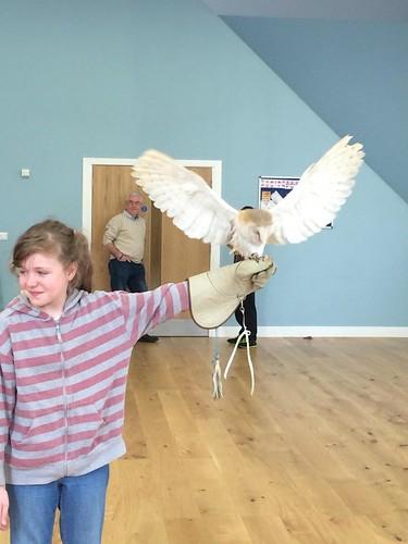 Bird of Prey Handling