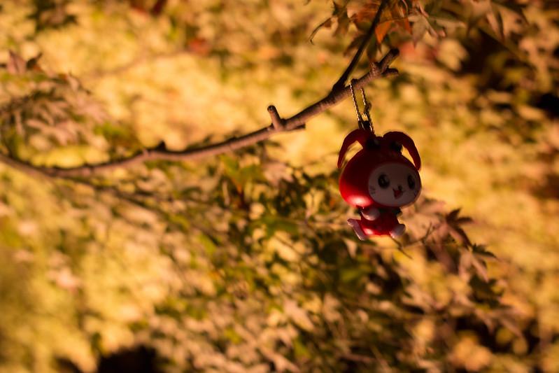 20141122-武奈ヶ岳&京都ライトアップ-0839.jpg