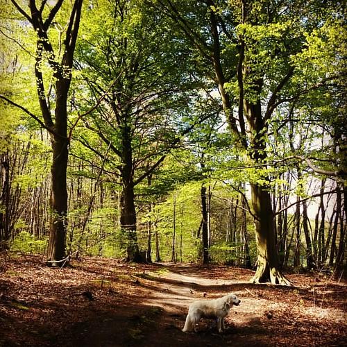 In the woods 🌲 #hiking #wijngaardberg #zondagswandeling #naturelover #naturelovers #outdoors #forest #wandelen #indenbos #bos