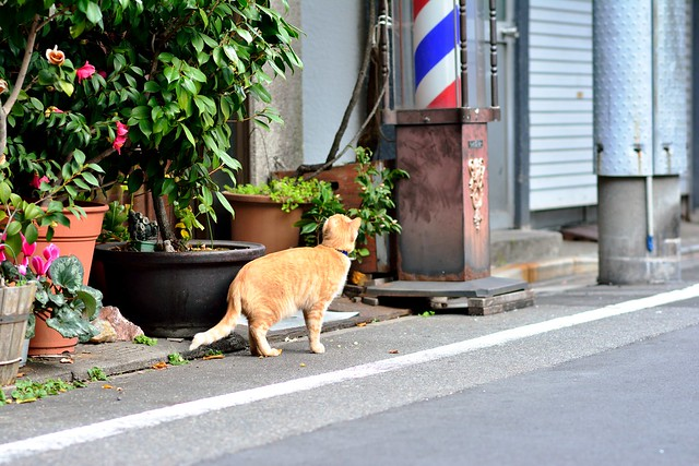 Tsukiji_cat_02