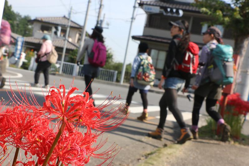 2014-09-23_00028_巾着田.jpg