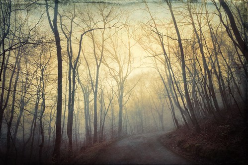 road forest textures topaz texturetuesday