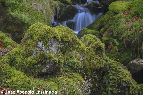 Parque Natural de Gorbeia #DePaseoConLarri #Flickr -2584