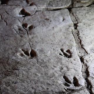 Sapatila Cave Dinosaur Prints