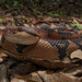 Bushmaster WA macro by Andrew Snyder Photography