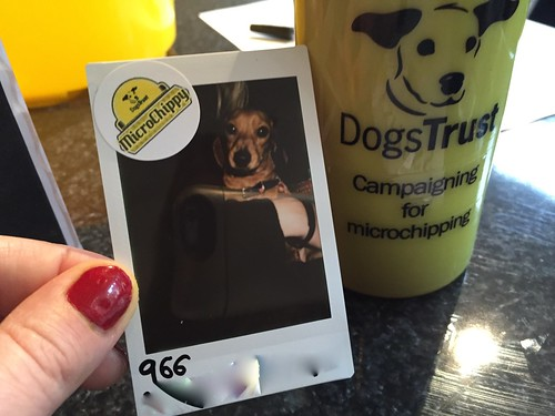 dogs trust microchippy campaign pop up bubbledogs