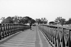 ponte per l'isola
