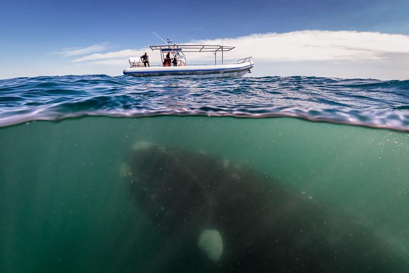 world-whale-day-photos-41__880