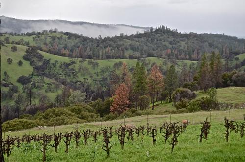 pink music clouds wine vineyards winetasting amadorcounty barreltasting cosumnesriver storywineryview
