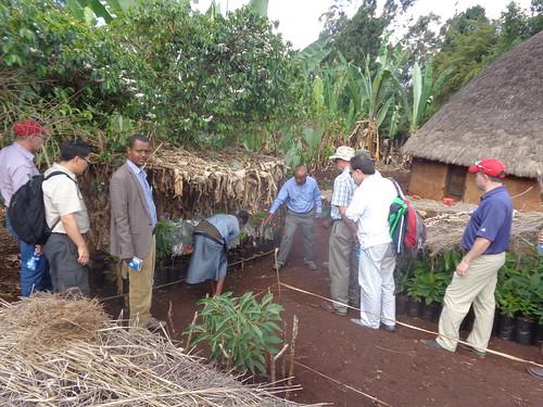 A visit to a fruit tree nursery (Photo Credit:ILRI\Yoseph Mekasha)