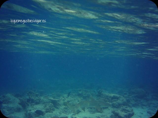Maldivas12