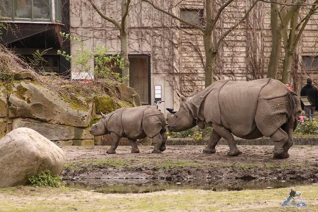 Tierpark Berlin 17.04.2016  0177