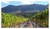 @wine farm