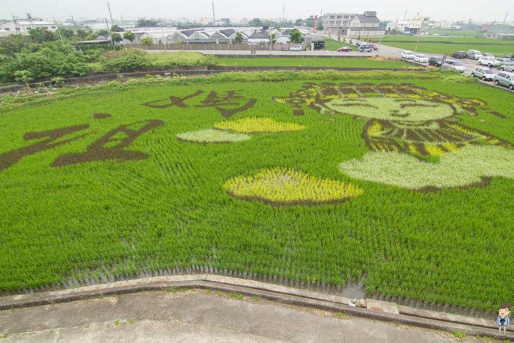 苑裡彩繪稻田 (9)