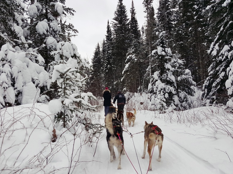 Aventure Inukshuk Dog Sledding