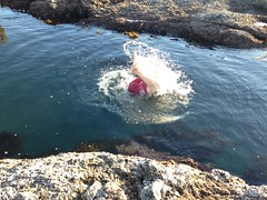 First dive in the sea 2016