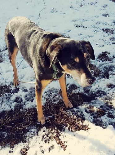 Rescued senior dog #adoptdontshop #LapdogCreations