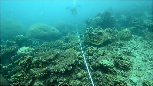 ปะการัง เกาะเต่า