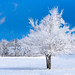 Wintery Breath... by mc_icedog