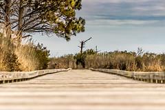 Bodie Island Boardwalk
