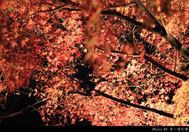 京都-清水寺148