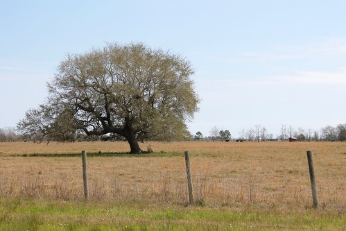tree field fence wire texas pasture barbed