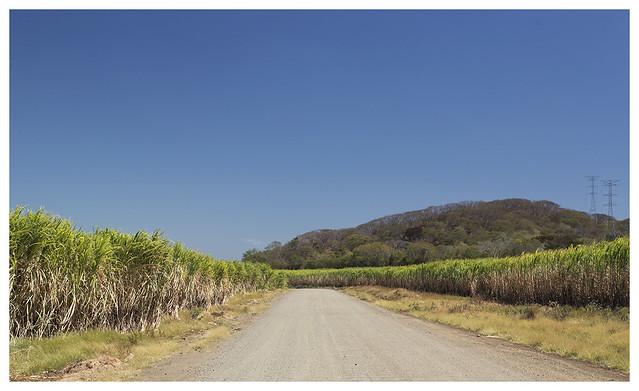 2016-02-16 Rl Viejo Wetlands 13 (sugar cane)