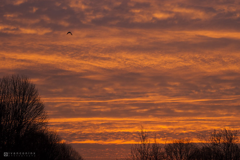 Sunrise – Mechelen – 2016 03 01 – 01 – Copyright © 2016 Ivan Coninx
