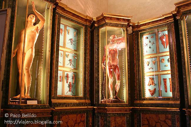 Museos Universitarios. © Paco Bellido, 2007