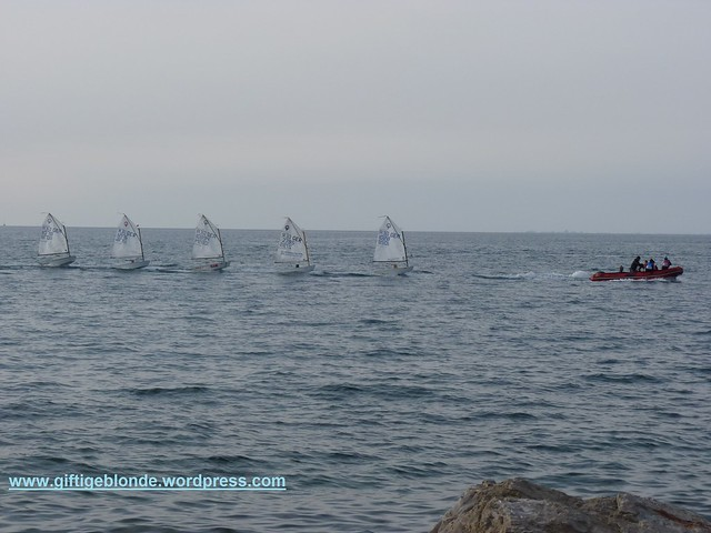 Regatta in Piran