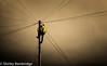 Up the pole.jpg