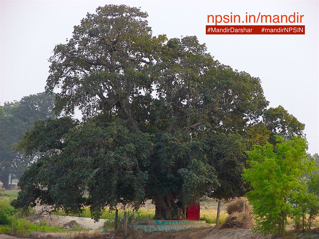 A huge banyan tree near temple. As per Hindu calendar, in the month of Sawan a large mela organised by devotees.