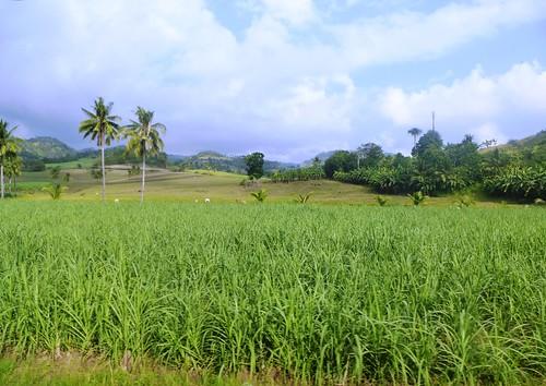 P16-Negros-San Carlos-Dumaguete-Route (16)