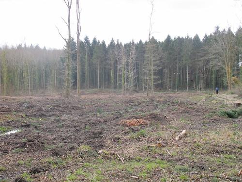 Walker in Spearywell Wood