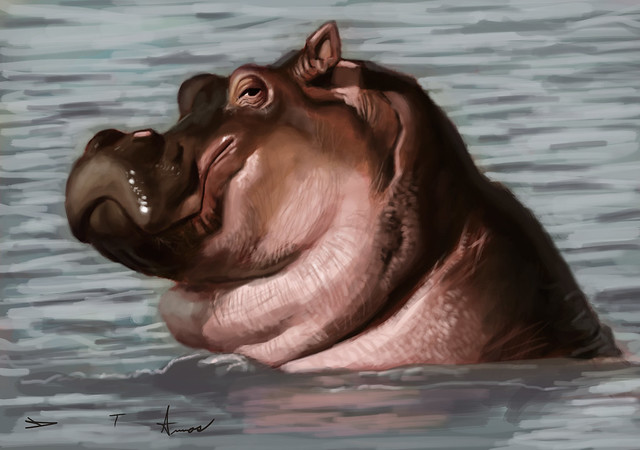 Hipposketch