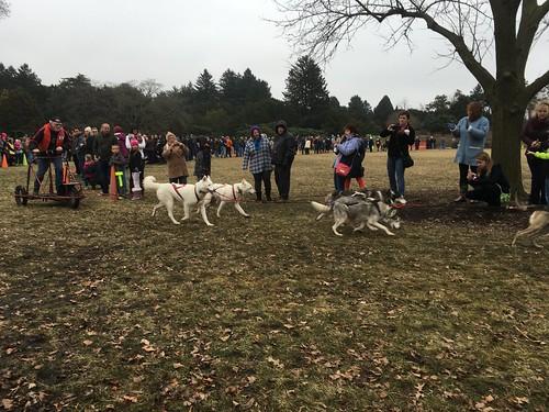 Husky Heroes at the Arboretum