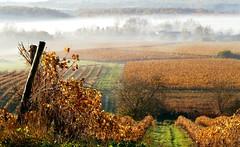 Automne en Cognac - Autumn in Cognac - [Explore]