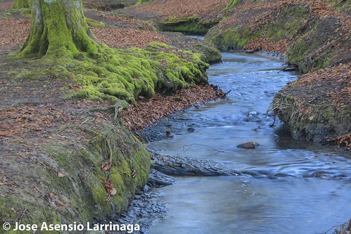 Parque Natural de Gorbeia  #DePaseoConLarri #Flickr -3072