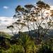 Awhitu Peninsula by Sock Merchant