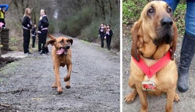 Každý pes má svůj den: fenka dokončila půlmaraton na 7. místě