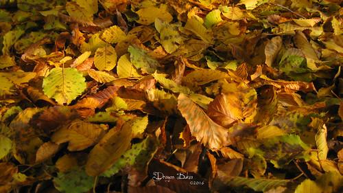 autumn colour macro nature leaves forest colours foliage leafs