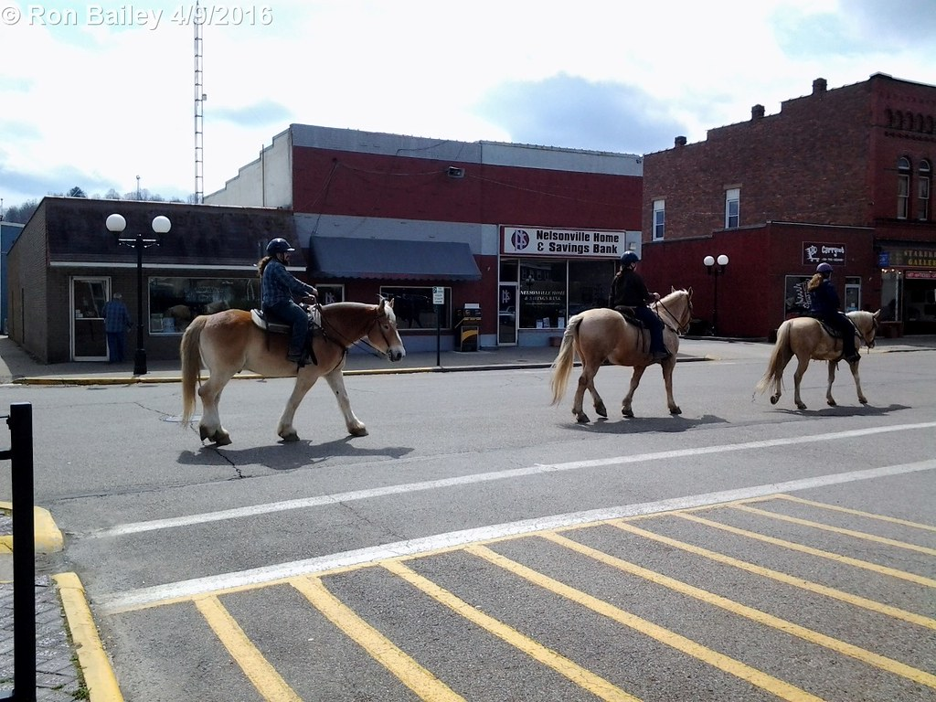 Horses Crossing the Square 04-09-2016 1